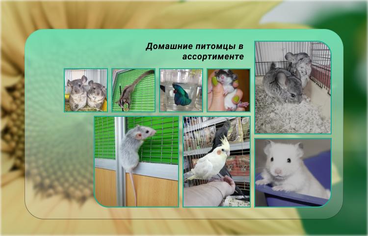Продажа животных