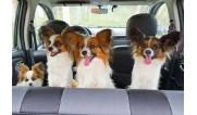 Путешествуем в автомобиле
